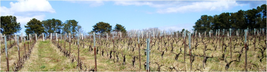 VInes - Canobolas~Smith Wines, Orange NSW
