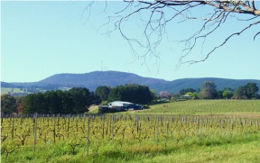 View of Mt Canobolas from Canobolas Smith Wines